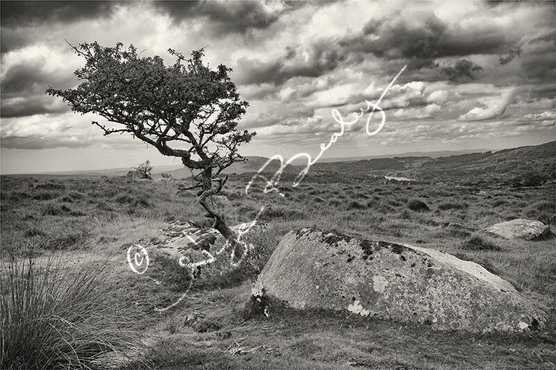 Wind Shaped Tree