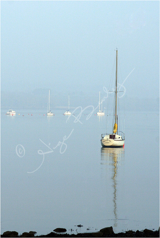 Early morning on the Tamar