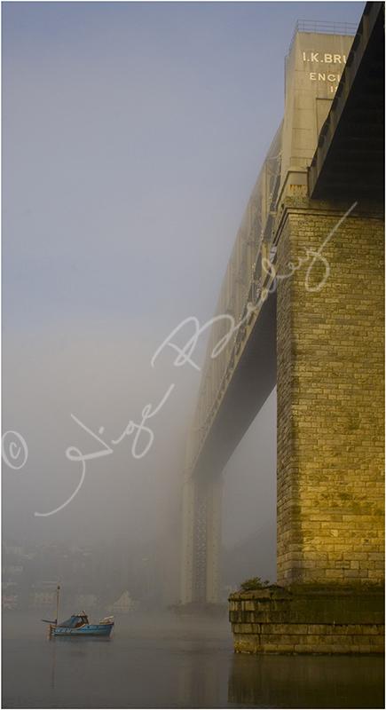 Albert in the Mist