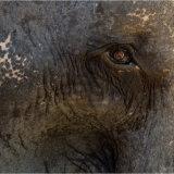 An Elephant's eye