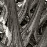 Palm Stems