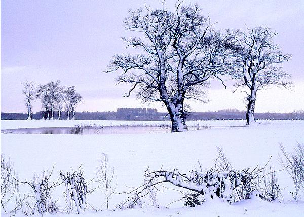 Cool Light of Winter