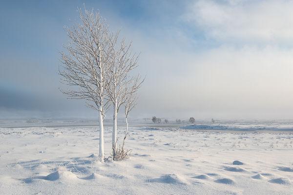 Winter Moorland