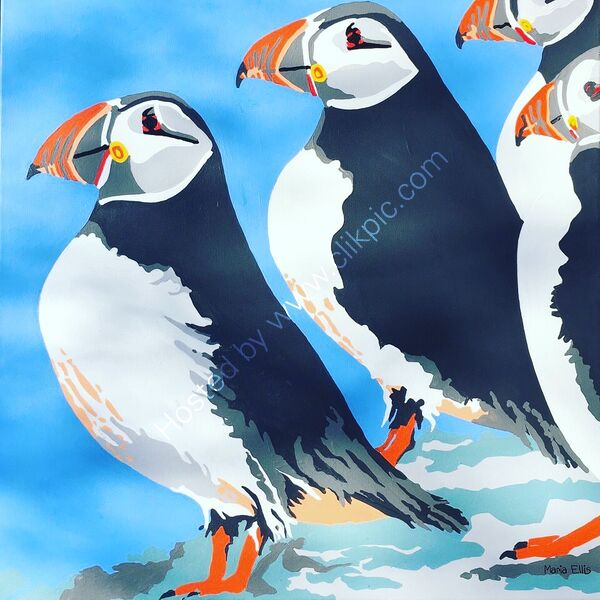 ...more Scilly Puffins