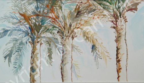 'Arabian palms'