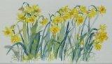 'Spring daffs'