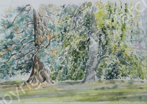 'Two trees at Batsford Arboretum'