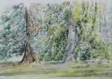 'Two trees at Batsford Arboretum'
