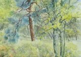 'Trees in the spinney'
