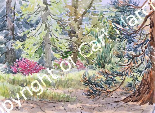 'Early summer at Batsford Arboretum'