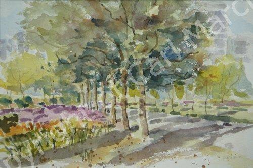 'Sunlight in the park'