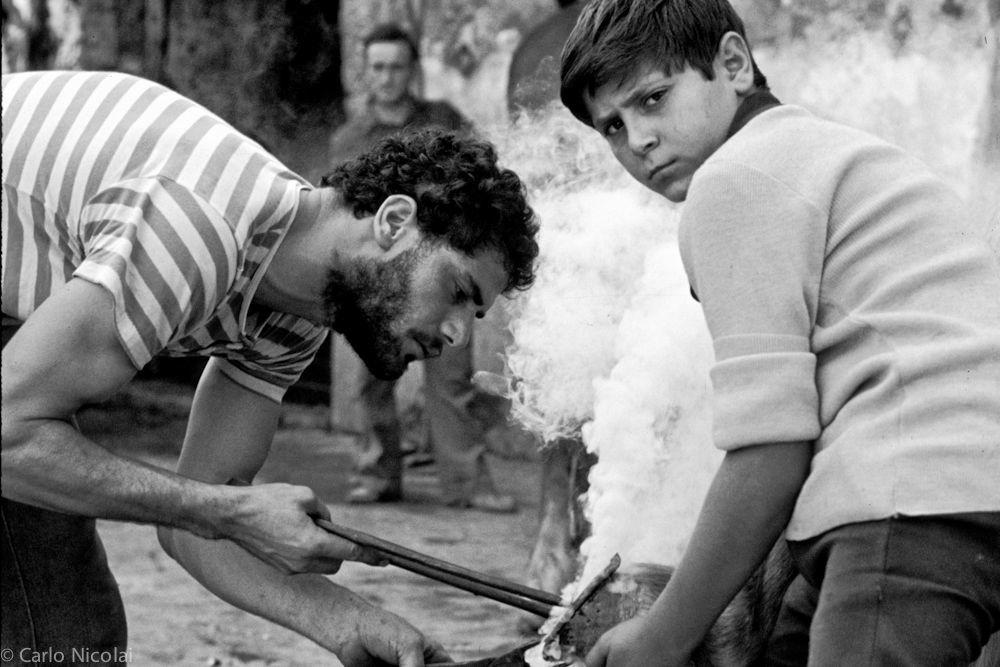 Horse shoeing, Caserta, Italy 1981