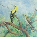 golden orioles    SOLD
