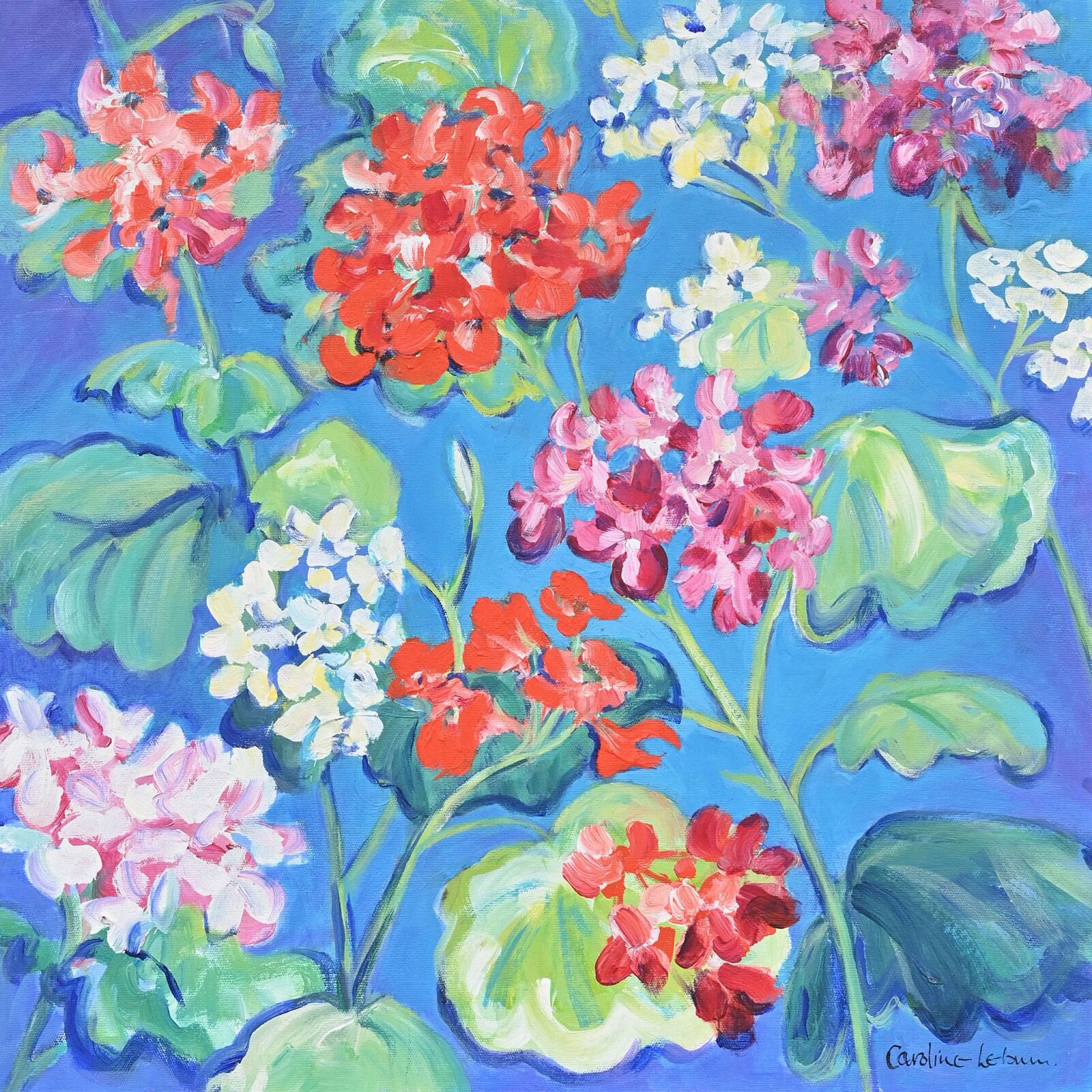 Geraniums on blue 50x50