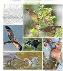 Feature on birds