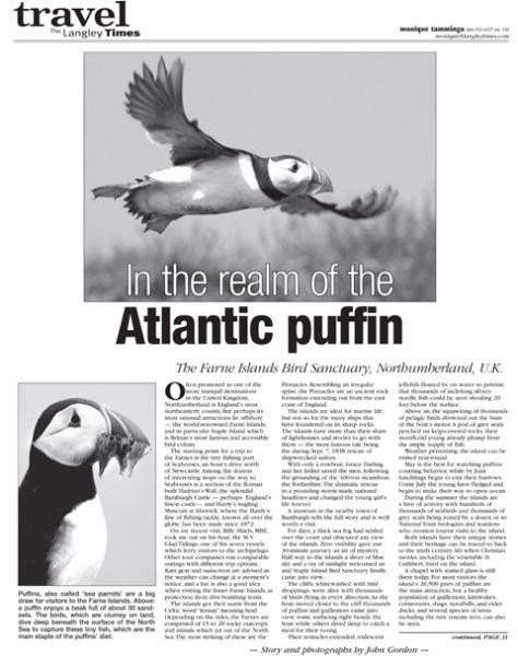 Atlantic Puffins feature
