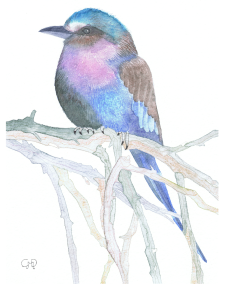 Lilac Breasted Roller Bird A6 Card