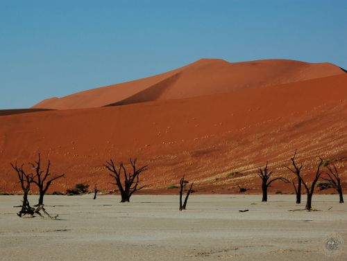 Trees at Deadvlei