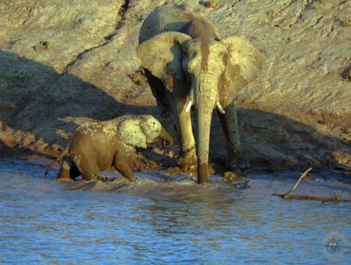 Mother and baby at the waterhole