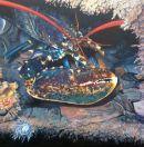 Lobster. SOLD    ,      A4  prints available, £15 unframed, £35 framed.