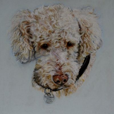Poodle Mix 'Charley'