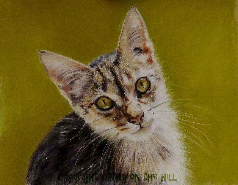 Tabby Kitten 'Jerry'