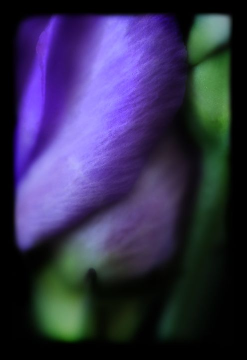 Bloom 3