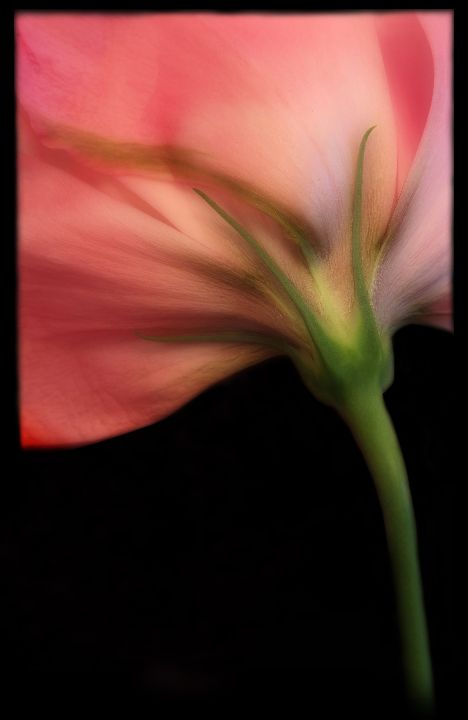 Bloom 9