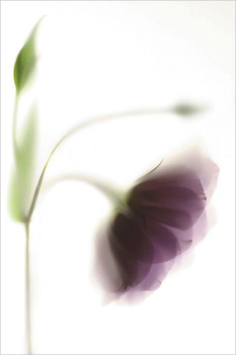 Colour flora 1