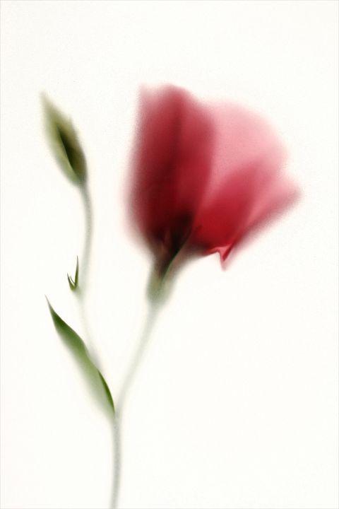 Colour flora 4