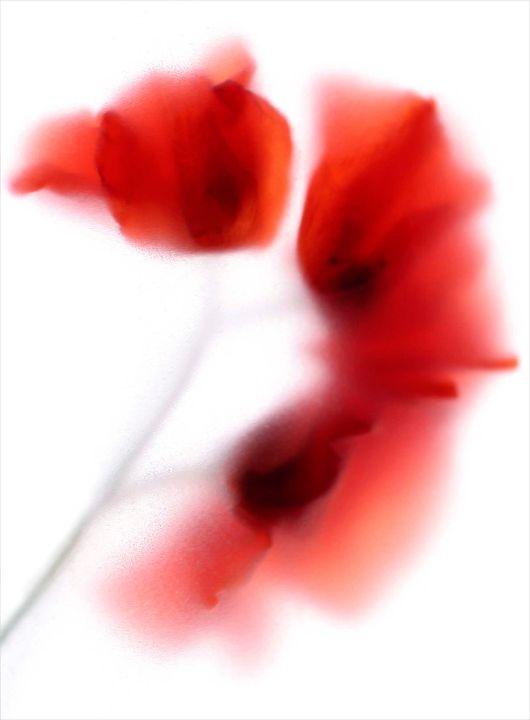 Colour flora 6