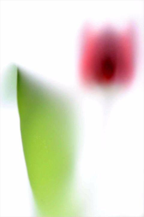Colour flora 7
