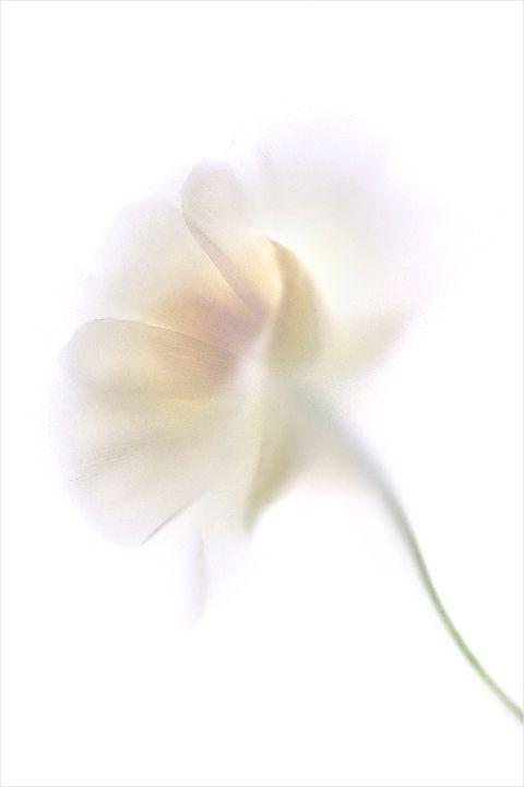 Pale Flower 6