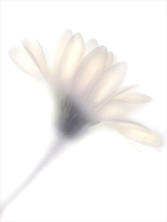Pale Flower 7