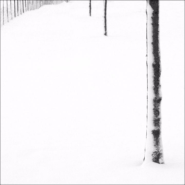 Snowscene 6
