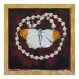 Butterfly and Pearls
