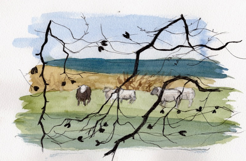 Sheep,Kittleyknowe