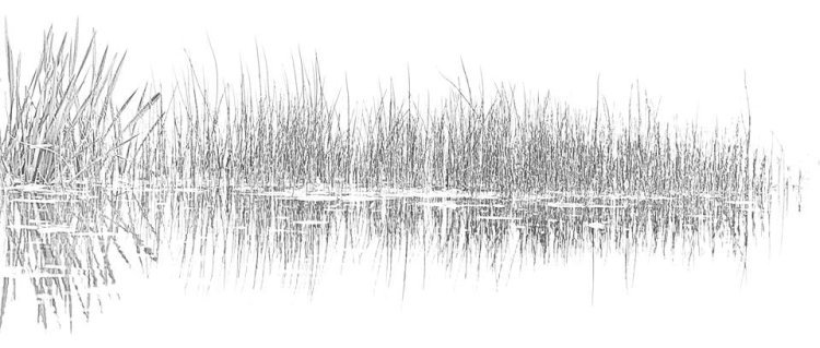 The Sound Of Reeds, White Noise