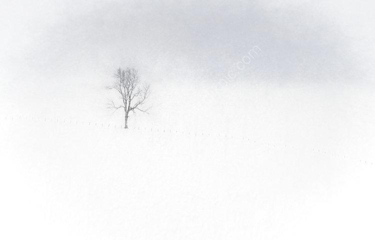 Calum's Tree