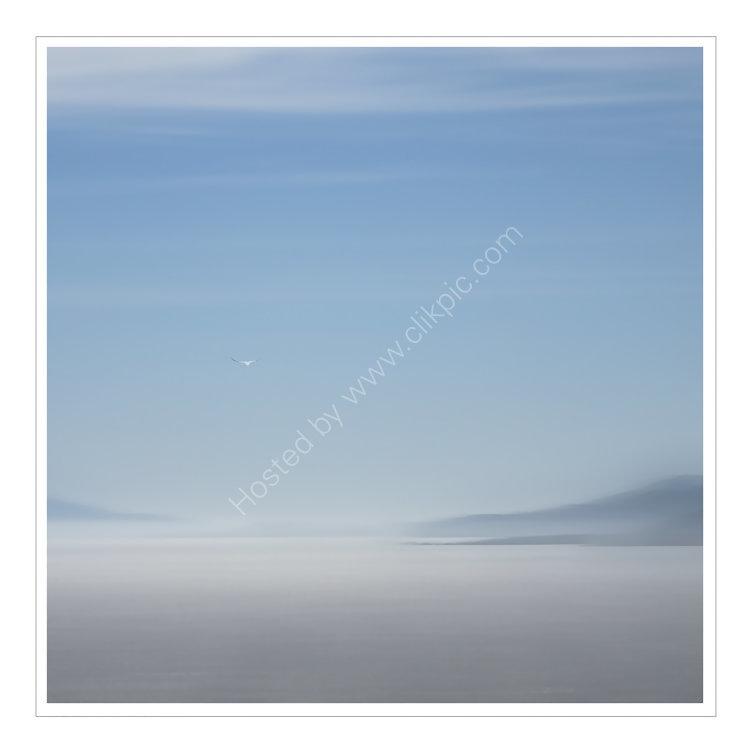 Gannet Flying East to Skye