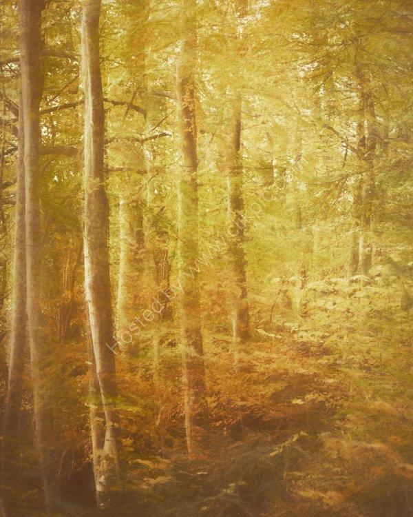 Autumn Woods, Balmerino