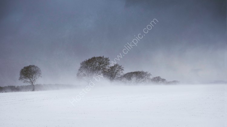 Snow Storm, St Fort Hill, Wormit