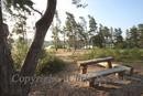 Pine picnic Seat & view of Frensham Little Pond