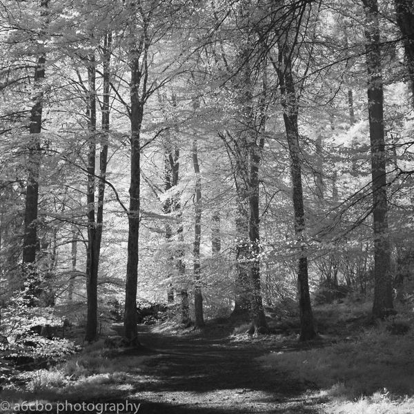 Snowdonia woods