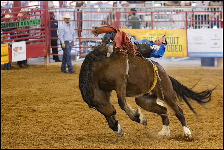 Miami Rodeo - Joint Winner - pdi (Motion) Brian Hodgkins