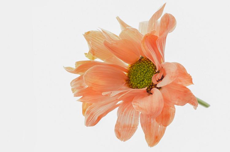 Fine Art Flower - Graham Williams