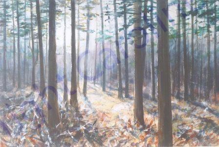 Forest, Light