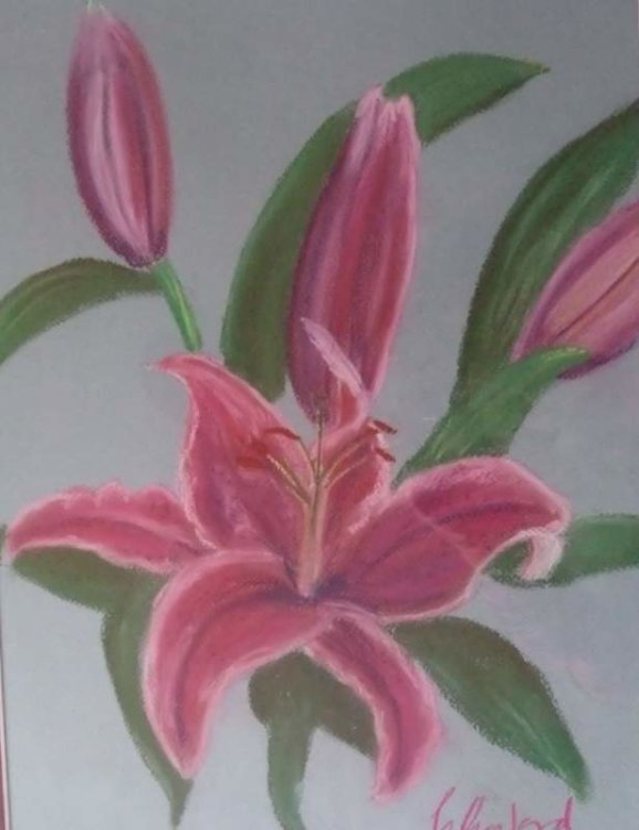Pink Lilies £85