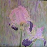 Pink Iris sold