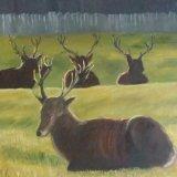 Deer at Dusk, Woburn  £65